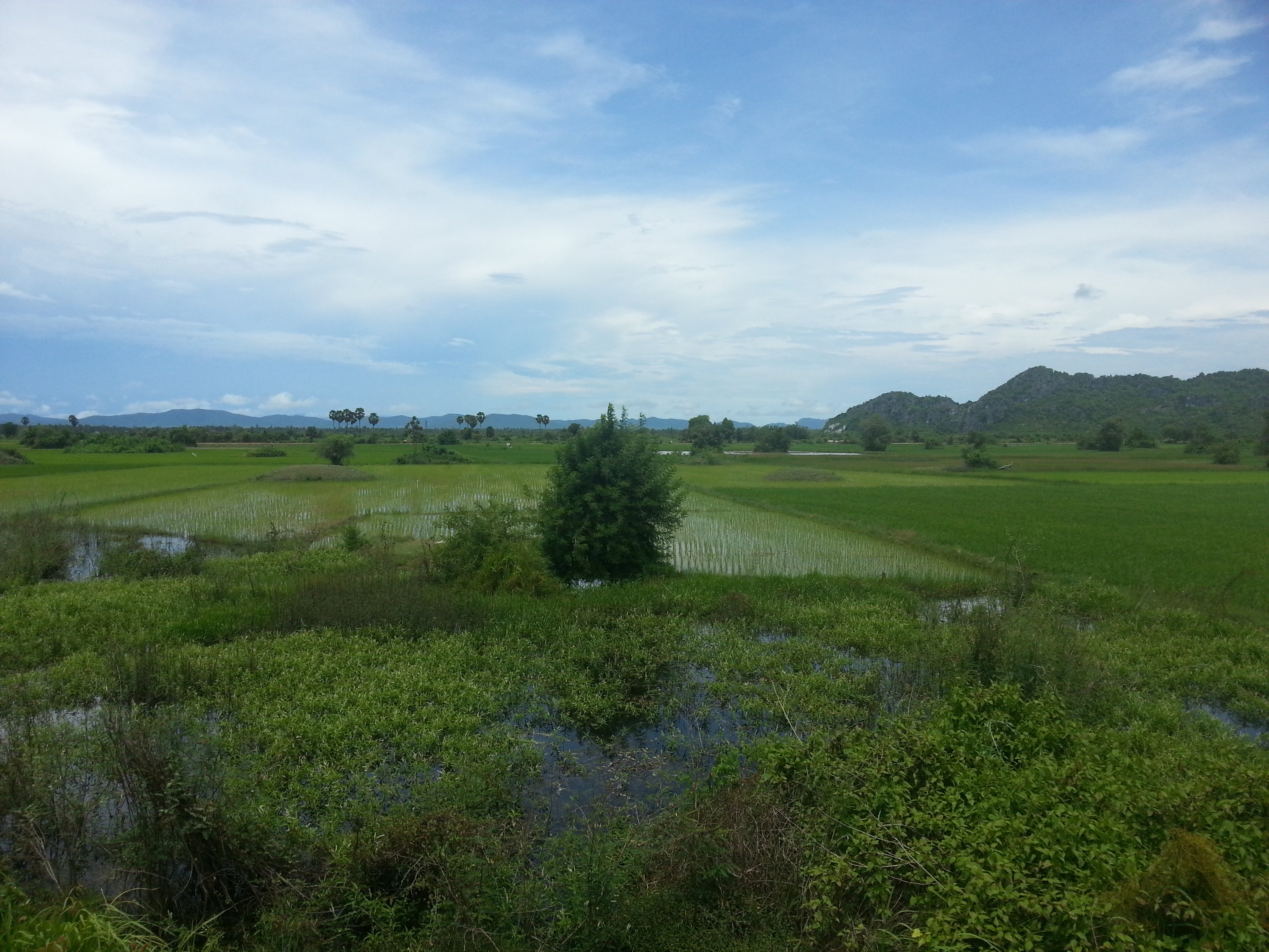 Paddy fields on the way to Sihanoukville
